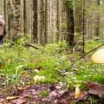 Спустя несколько суток грибник сам вышел из леса