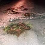 В Новгородском районе травой и грязью отремонтировали дорогу