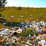 В Новгородской области почти каждая третья проба почвы не соответствует нормам