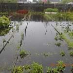 В Боровичах затопило несколько подвалов и огородов с урожаем