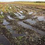 Старорусские аграрии из-за ливней полностью потеряли урожай на 235 га, ущерб превысил 3,3 млн рублей
