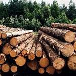 В Новгородской области реализуются два приоритетных проекта в области освоения лесов