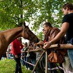 Праздник лошади «Кто с конем – тот с добром» в Музее народного деревянного зодчества «Витославлицы»
