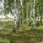 Проголосовать за зеленый символ Новгородской области можно с помощью мобильного телефона