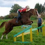 XI Боровичский конный праздник в честь святых Флора и Лавра