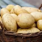 Новгородским урожаем картофеля можно 3 раза обогнуть нашу планету