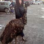 Фотофакт: по улицам Пестова страуса водили, как видно напоказ