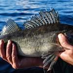 Эссе претендентов на руководство охотничьим хозяйством и рыболовством Новгородской области: часть 1