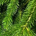 Рабочих из Ленобласти подозревают в незаконной рубке боровичского леса почти на 5 млн рублей