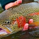 Эссе претендентов на руководство охотничьим хозяйством и рыболовством Новгородской области: часть 2