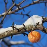 Фотофакт: шутка жителя Валдая вырастила «мандариновое дерево» на все времена