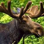В Санкт-Петербурге создадут «Дикий патруль» для помощи лесным животным, случайно попавшим в город