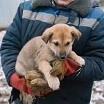 Первый из щенков, обитавших на Рюриковом городище, нашел дом благодаря интернету