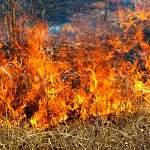 Правительство обязало собственников земельных участков убирать мусор,косить траву и бороться с сорняками