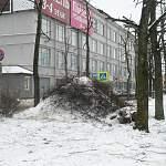 Фотофакт: Великий Новгород «украсила» куча грязного снега со спиленными ветками