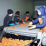 Новгородская область вошла в число регионов с наибольшим снижением числа безработных