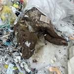 В пригороде Великого Новгорода появилась свалка трупов домашних животных