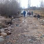Любытинская дорога, восстановленная после летнего потопа, выдержала новый удар стихии