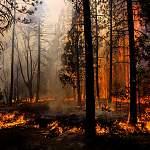 В Новгородской области впервые в этом году загорелся лес