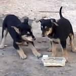 Поступили новости о замурованных в новгородском «собачьем роддоме» щенках