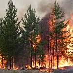 Два района Новгородской области стали чрезвычайно пожароопасны