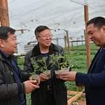 «Китайские теплицы» в Старой Руссе снова нарушили миграционное законодательство