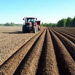 Боровичский фермер Гелетей продолжает удивлять. Теперь он сажает картошку на автопилоте