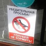 Легендарное новгородское кафе ввело санкции против голубей