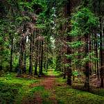 В лесах Новгородской области за сутки потерялись три человека. Нашли не всех