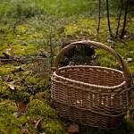 В пестовский лес на поиски грибника вышли почти 20 человек
