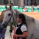 Новгородская кобыла Гофра орловской породы покоряет лошадиные конкурсы красоты