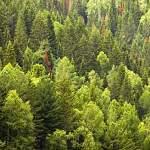 Пропавшую в пестовском лесу пенсионерку нашли за три с половиной часа