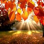 Осень на даче: что можно сажать и пересаживать в сентябре?