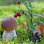 Депутаты предложили продавать грибы, ягоды и орехи государству за деньги
