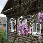 В конце сентября в Твери цветет сирень, в Новгороде – шиповник