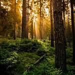 Нашли одну из пенсионерок, пропавших в лесу в Новгородской области
