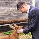 Глава Пестовского района познакомился с лосёнком, страусёнком и странной курочкой