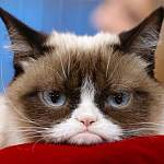 Поклонники скорбят о Сердитой Кошке