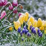 В Гидрометцентре рассказали, ожидать ли новгородцам заморозков в мае