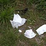 На решение проблемы вывоза мусора из новгородских деревень отведен месяц