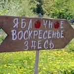 Новгородцев зовут на веселую уборку «Яблочное воскресенье»