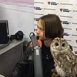 Серая неясыть стала гостем эфира новгородских «Людоведов»