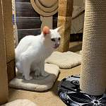 Андрей Никитин посетил Марево, где кошка Пудра проверяет когтеточки