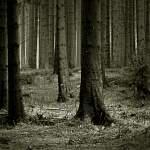 В Новгородской области за сутки в лесу потерялись четыре человека