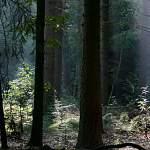 За несколько часов в лесах Новгородской области заблудились пять подростков
