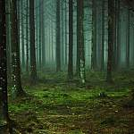 В Маловишерском районе ищут мужчину, который четыре дня блуждает по лесу