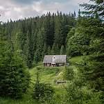 Четыре дня блуждавший по маловишерскому лесу мужчина выбрался самостоятельно