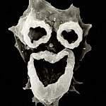 В США обнаружена амёба, выедающая мозг