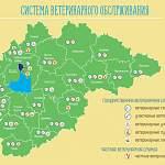 В День ветеринара «53 новости» публикуют интересную новгородскую инфографику
