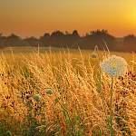 Синоптики рассказали, сколько еще пробудет лето в Новгородской области